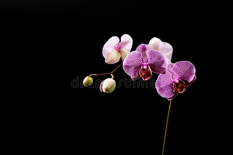 Download Purple Orchid stock image. Image of blooming, stamen - 22461713