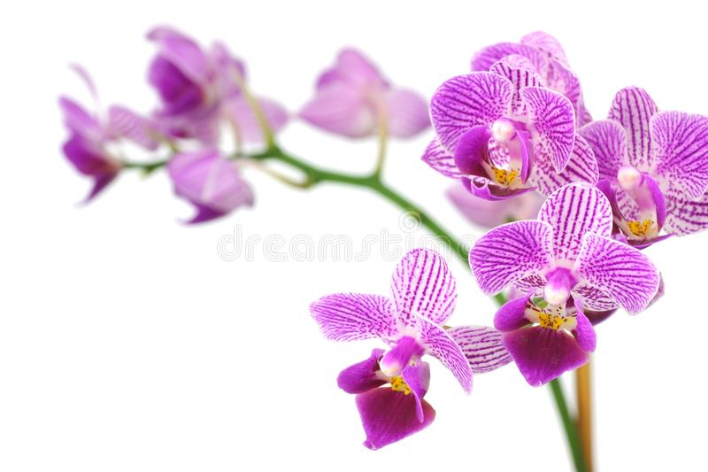 Download Purple orchid stock image. Image of flower, floral, bouquet - 28061901