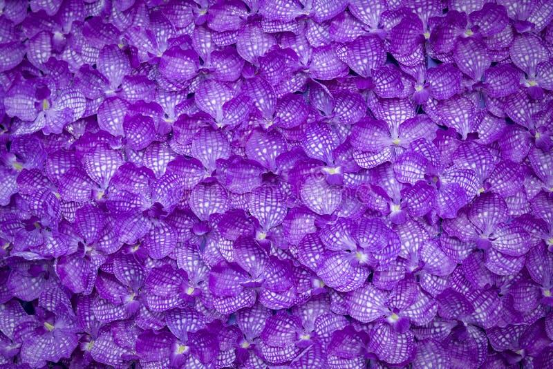 Purple orchid background, decoration flora wallpaper. stock image