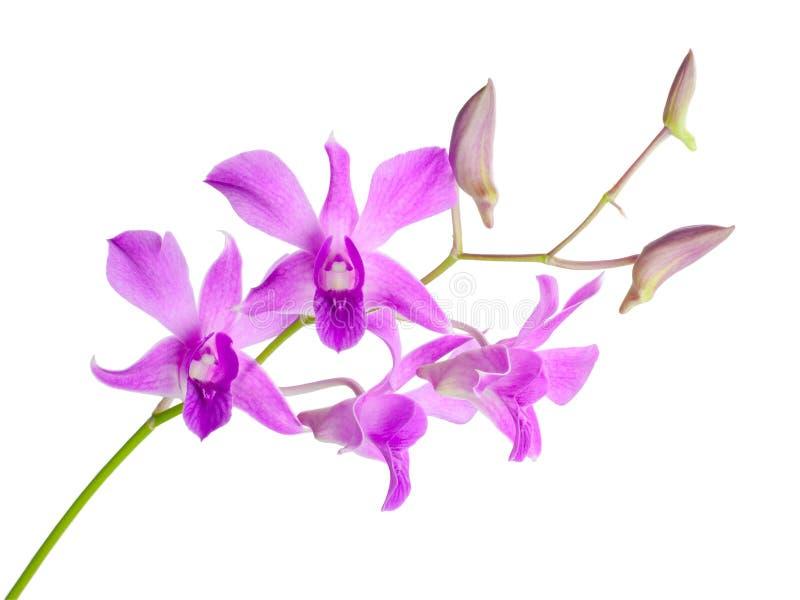 Download Purple orchid stock image. Image of bouquet, decorative - 30887015