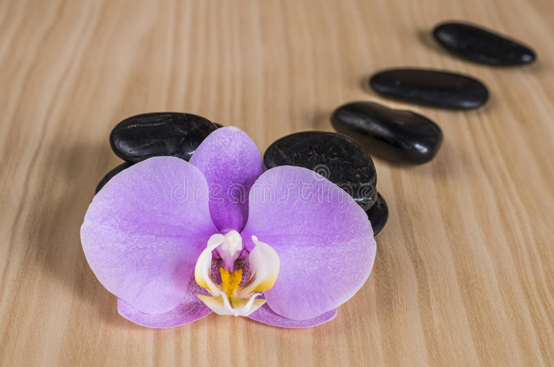 Download Purple orchid stock photo. Image of rock, objects, massage - 32323242