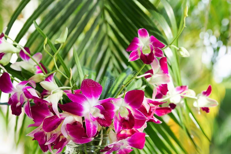 Purple orchid for decorative design. Floral background. royalty free stock photo