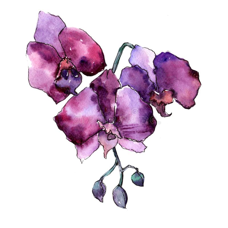 Purple orchid. Floral botanical flower. Wild spring leaf wildflower isolated. Aquarelle wildflower for background, texture, wrapper pattern, frame or border stock illustration