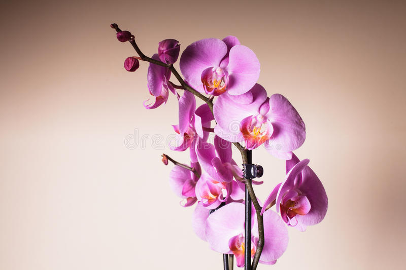 Download Purple orchid stock image. Image of blossom, floral, romance - 35383283