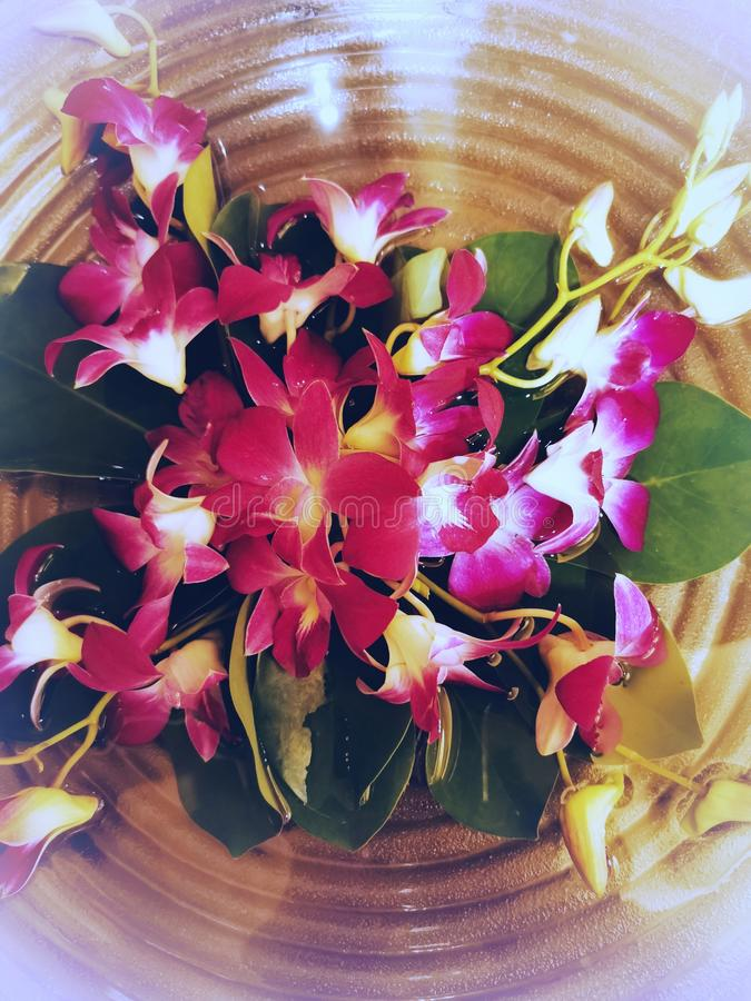 The purple orchid flower in the water bowl decoration interior room stock images