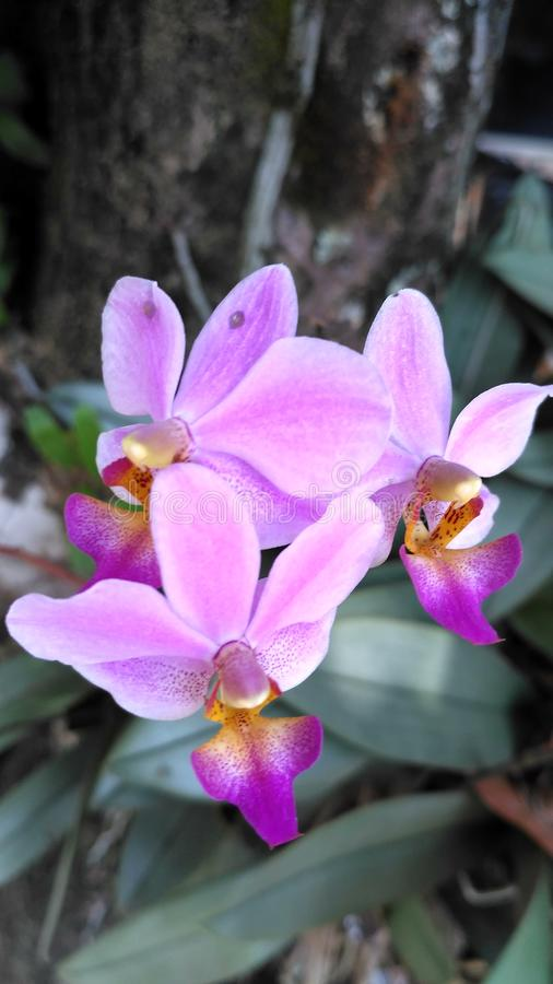 Purple orchid flowers stock photo