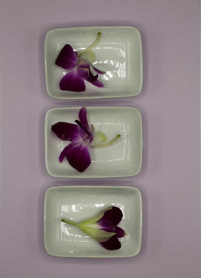 Purple orchid flowers arranged in white ceramic plates on a wooden tray. Pruple orchid flowers arranged in white ceramic plates on a wooden tray isolated on stock images