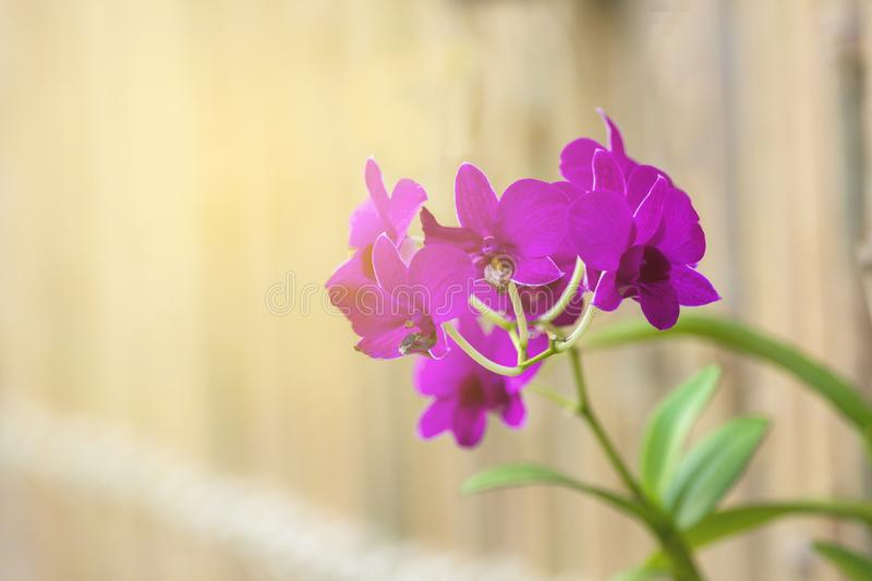 Purple orchid flowers in winter. Purple orchids in the garden during the winter stock image