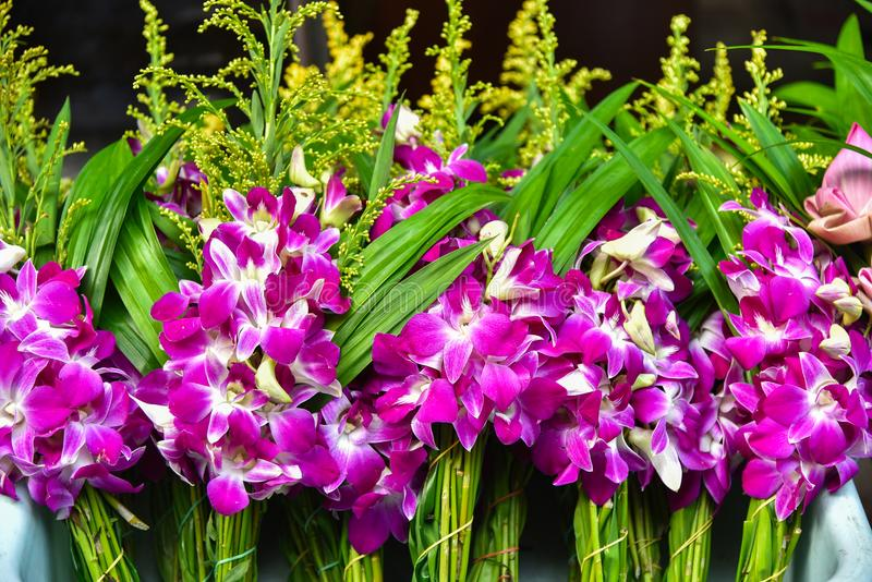 Purple orchid flowers at a Thai temple royalty free stock photography