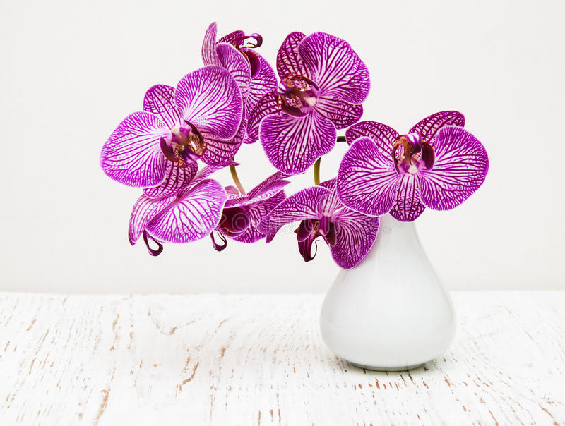 Purple Orchid Flowers In Vase Stock Photo Image Of Head Modern