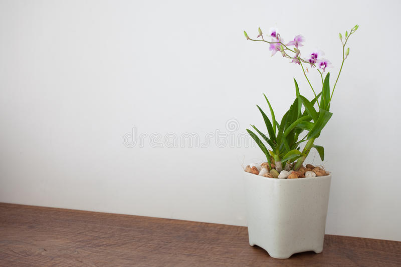 Purple orchid flowers in vase royalty free stock photo