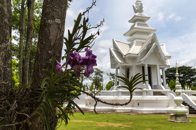 Purple orchid in White temple. Northern Thailand royalty free stock photos