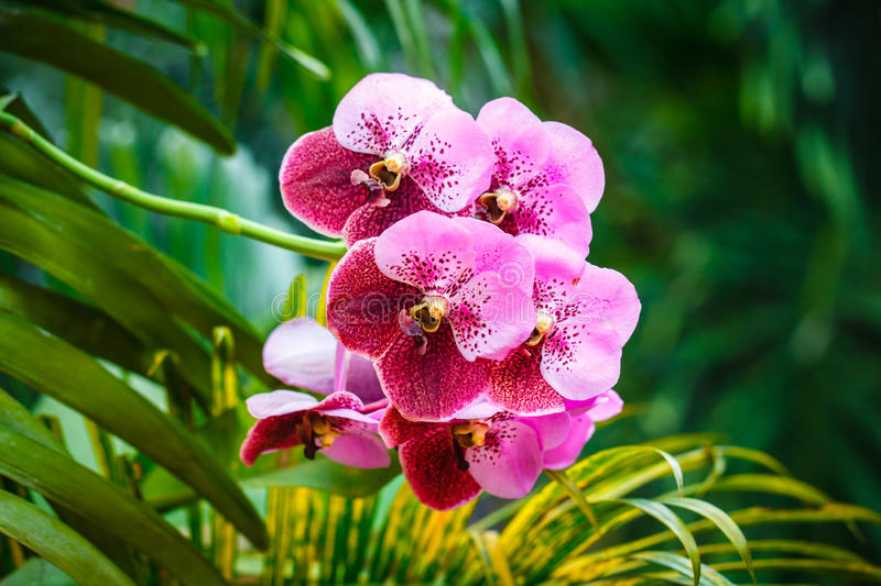 Purple orchids. Beautiful purple orchids with green palm leafs royalty free stock image