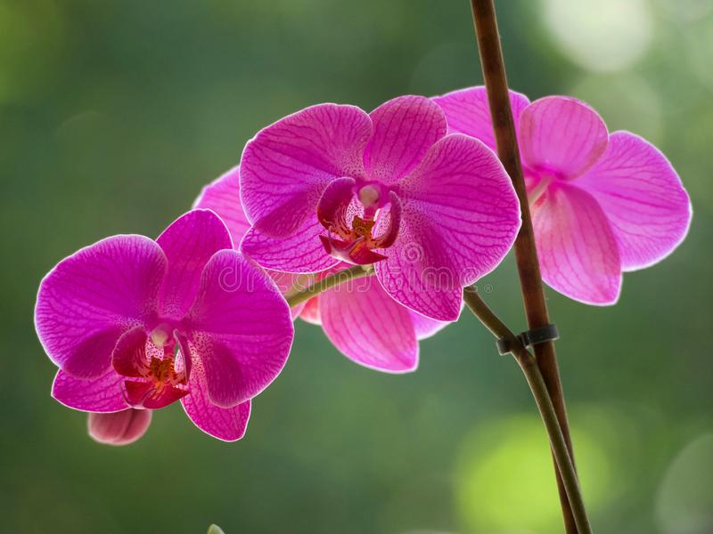 Purple orchids. On a blurred background stock photo