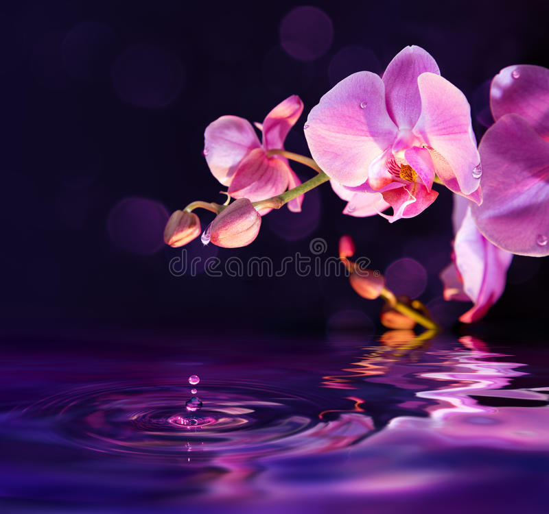 Purple orchids and drops in water. Purple orchids and drops on water stock photography