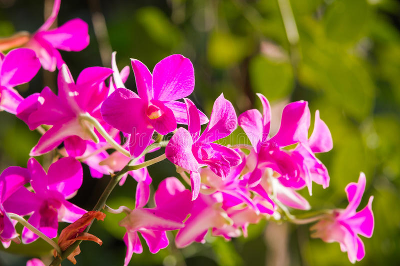 Purple orchids under the sunlight.  stock images