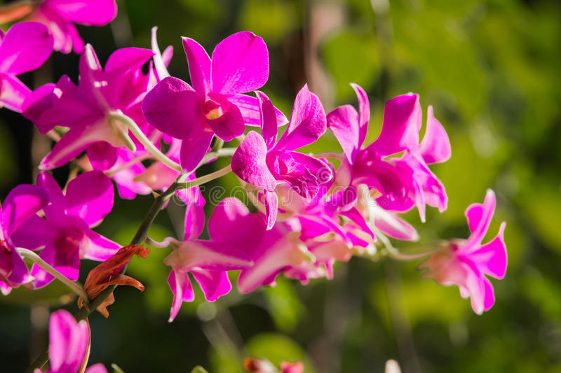 Purple orchids under the sunlight.  stock image