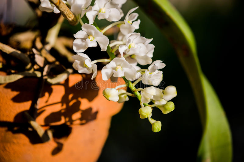 Purple orchids under the sunlight.  royalty free stock photo
