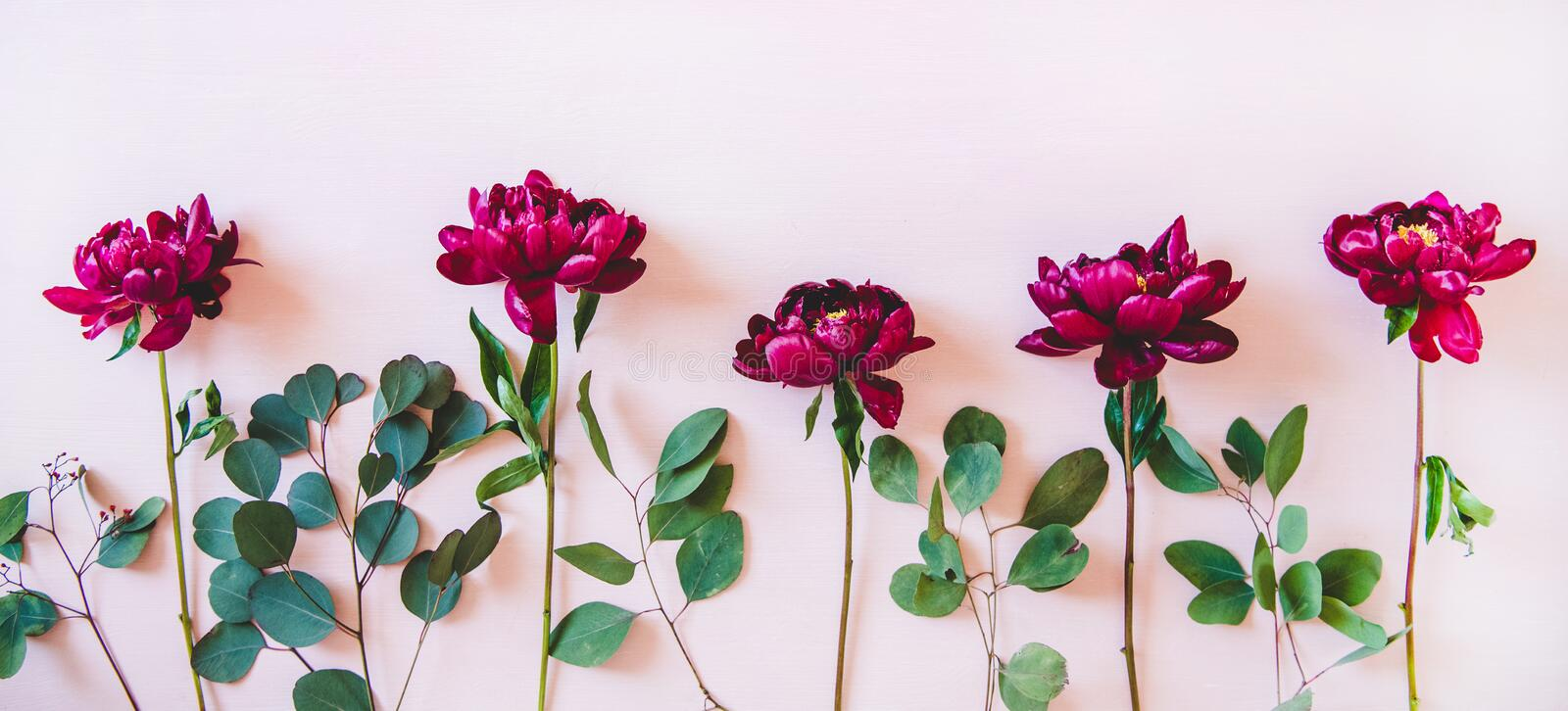 Purple peonies and green branches over pastel background, top view stock photo