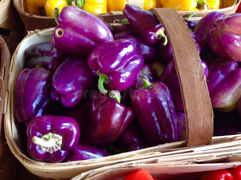 purple peppers stock image