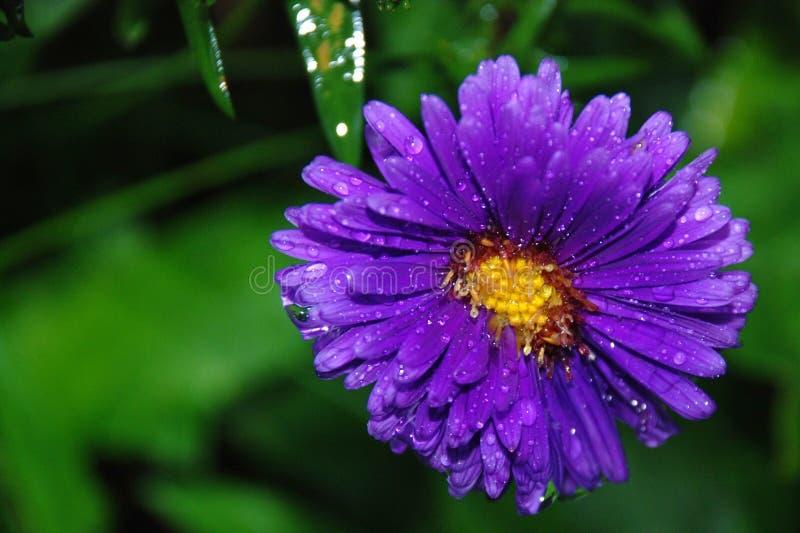 Purple Petaled Flower Free Public Domain Cc0 Image