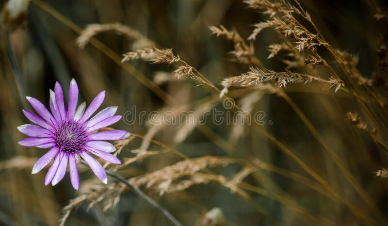 Purple Petaled Flower Macro Photography stock photo