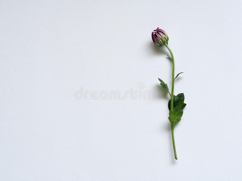 Purple Petaled Flower on White Surface stock images