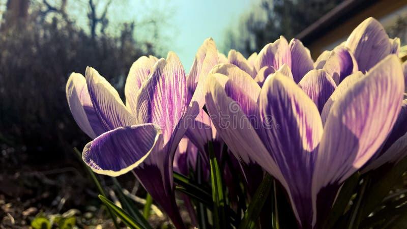Purple Petaled Flowers Free Public Domain Cc0 Image