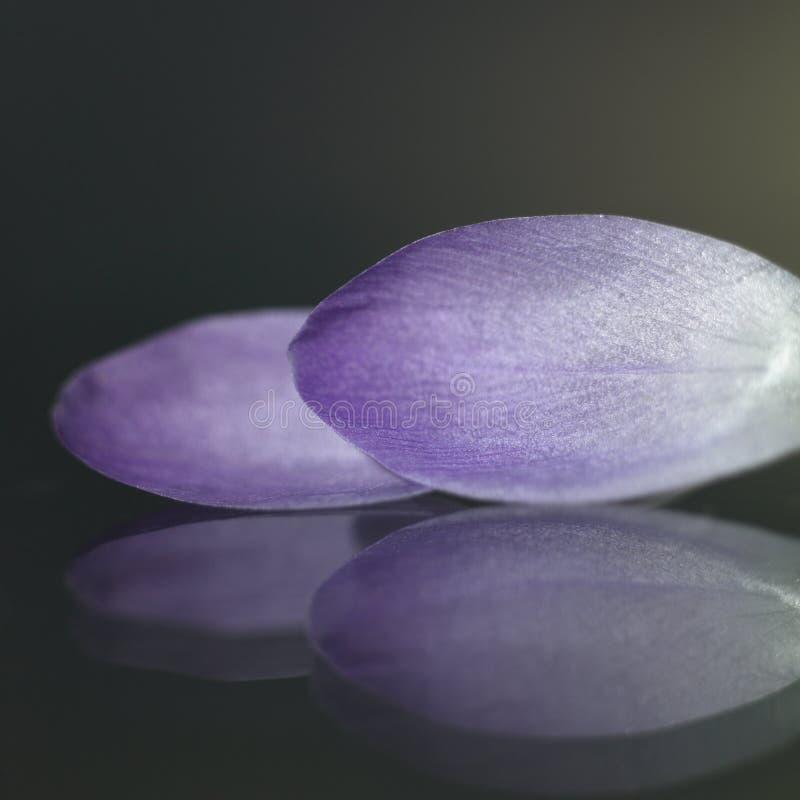 Download Purple petals stock photo. Image of grow, color, flowers - 28866306