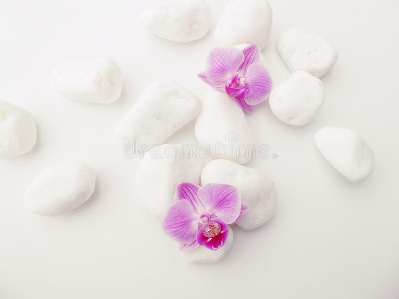 Purple Phalaenopsis Orchids with white stones royalty free stock image