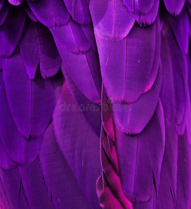 Purple/Pink Macaw Feathers stock photo