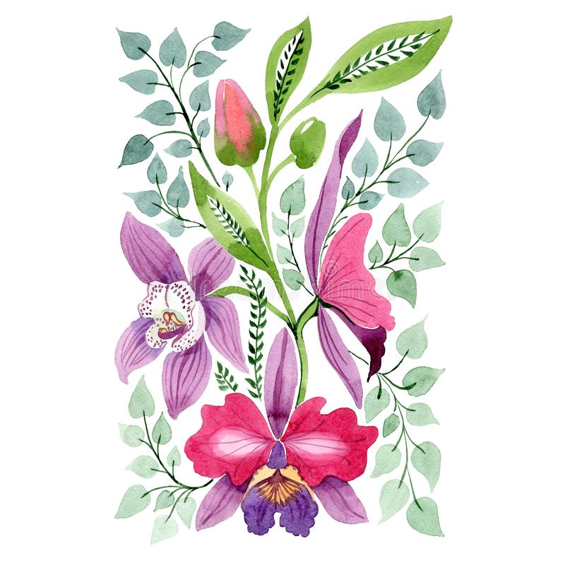 Purple pink orchid floral botanical flower. Watercolor background set. Isolated ornament illustration element. stock illustration