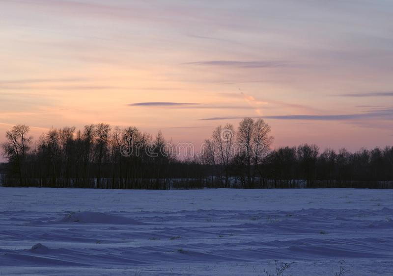 Purple pink sunset on the winter field. Sunset pink Golden sky with blue stripes of clouds. Silhouettes of bare trees on the horizon. Winter snow-covered field royalty free stock image