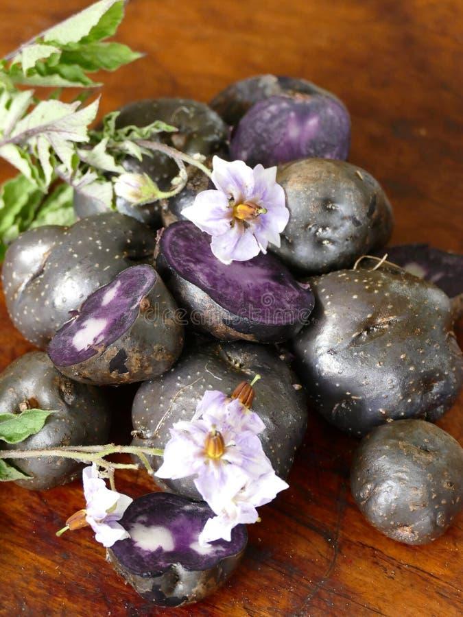 Purple Potatoes from New Zealand stock photos