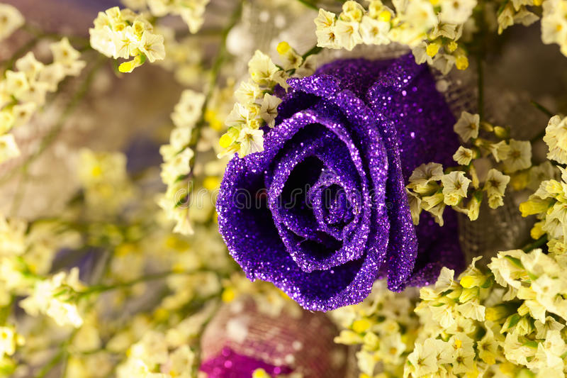 Purple Rose. A Purple Rose for lover, on Valentine's Day stock photo