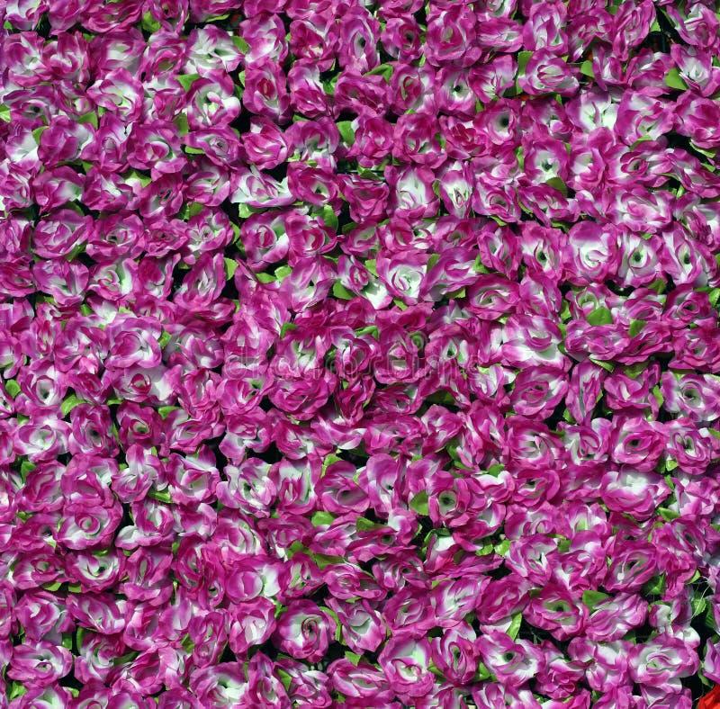 Free Purple Roses Royalty Free Stock Image - 7991556