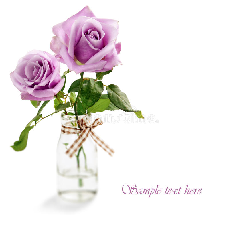 Download Purple Roses Isolated On White Background Stock Photo