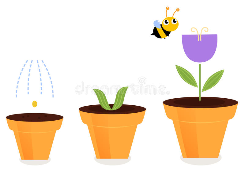 Flower in pots growth stages stock illustration