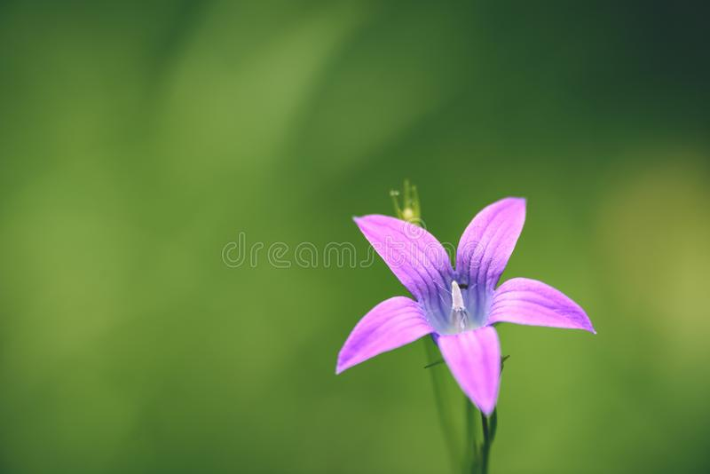 Purple spring flowers on green background - vintage pastel col. Purple spring flowers on green background with shallow depth of field - vintage pastel color stock photography
