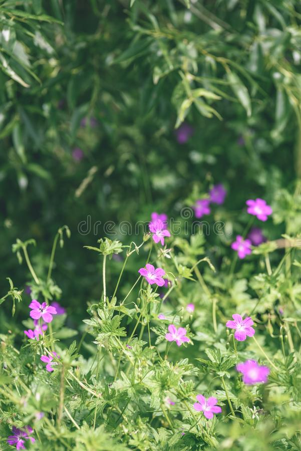 Purple spring flowers on green background - vintage pastel col. Purple spring flowers on green background with shallow depth of field - vintage pastel color stock photo