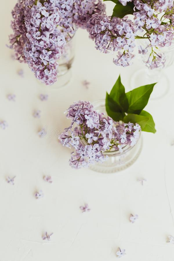 Purple spring lilac flowers still life on white. Background in the morning royalty free stock image