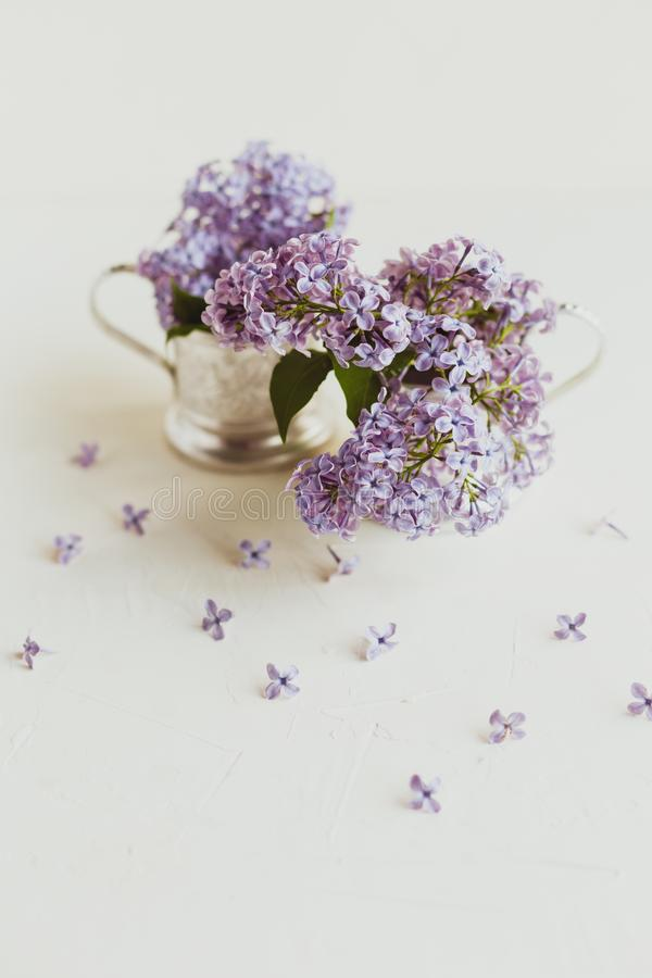 Purple spring lilac flowers still life on white. Background in the morning. Purple bunch of lilac in metal pots stock image