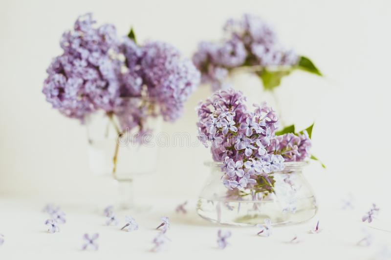 Purple spring lilac flowers still life on white. Background in the morning. Glass vase with water and purple lilac stock image