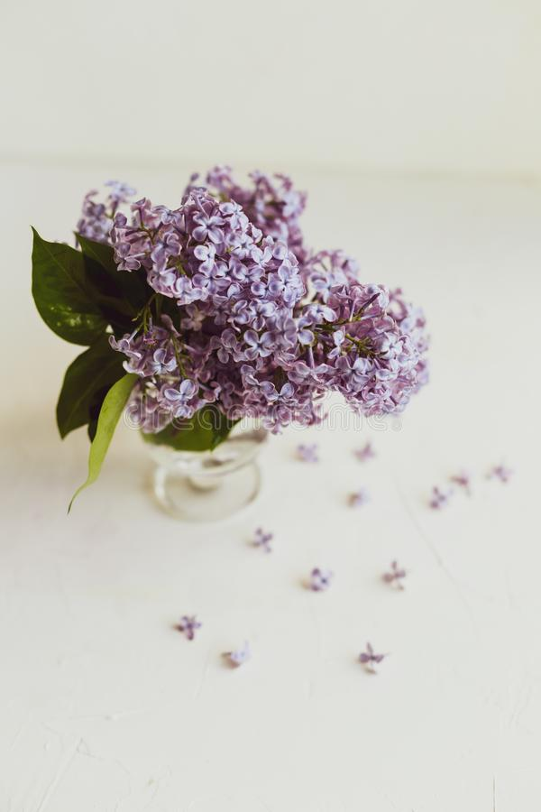 Purple spring lilac flowers still life on white. Background in the morning. Glass vase with water and purple lilac royalty free stock photo