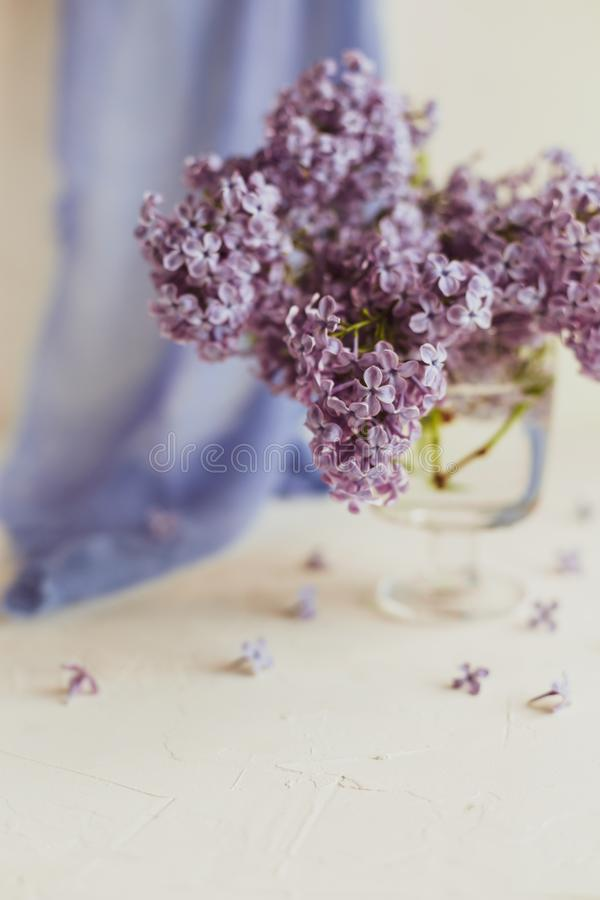 Purple spring lilac flowers still life white. Purple spring lilac flowers still life on white background in the morning. Glass vase with water and purple lilac stock image