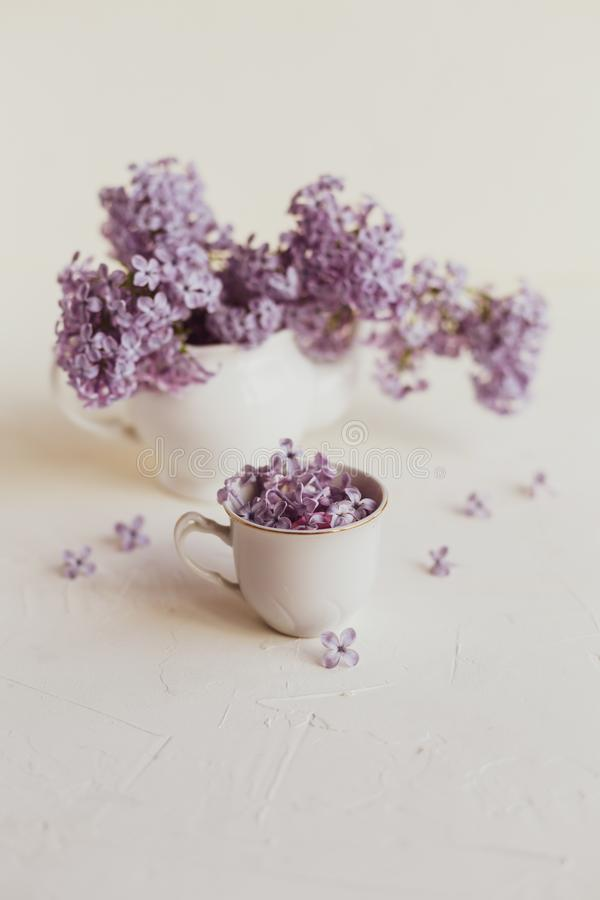 Purple spring lilac flowers still life on white. Background in the morning. Small tea pot and a cup are full of purple flowers stock photo