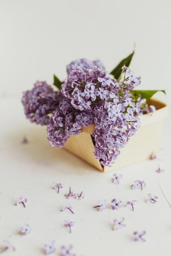 Purple spring lilac flowers still life on white. Background in the morning. Purple lilac in a wooden box stock images