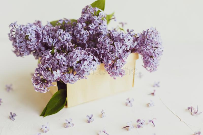 Purple spring lilac flowers still life on white. Background in the morning. Purple lilac in a wooden box stock photography