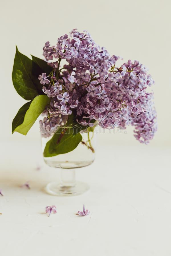 Purple spring lilac flowers still life on white. Background in the morning. Glass vase with water and purple lilac stock photo