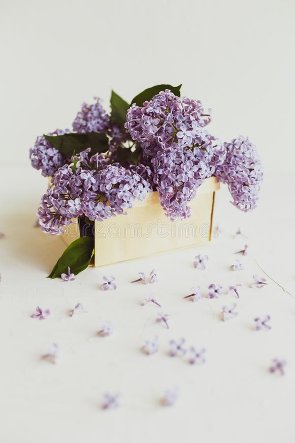 Purple spring lilac flowers still life on white. Background in the morning. Purple lilac in a wooden box stock image